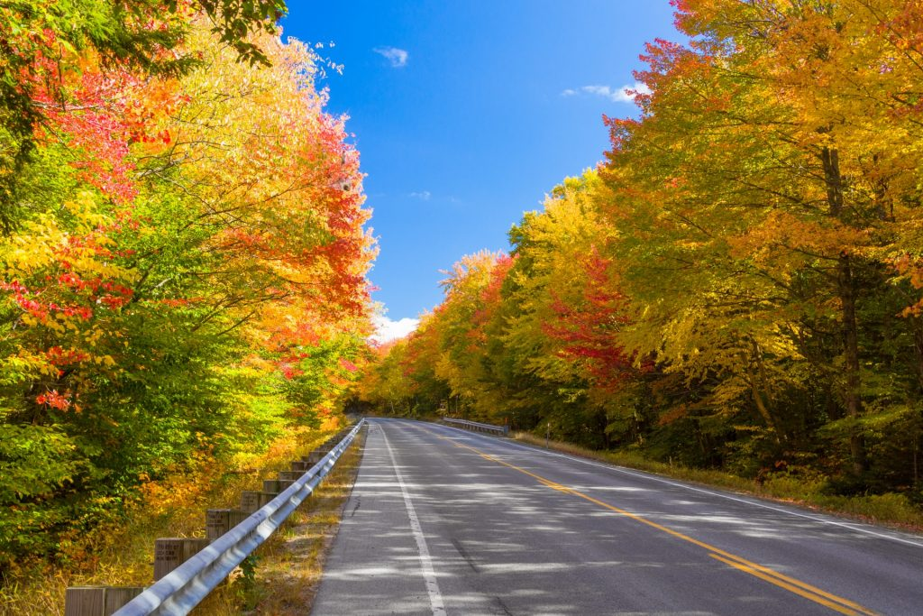 forest-road-in-fall-1478280646Bg6
